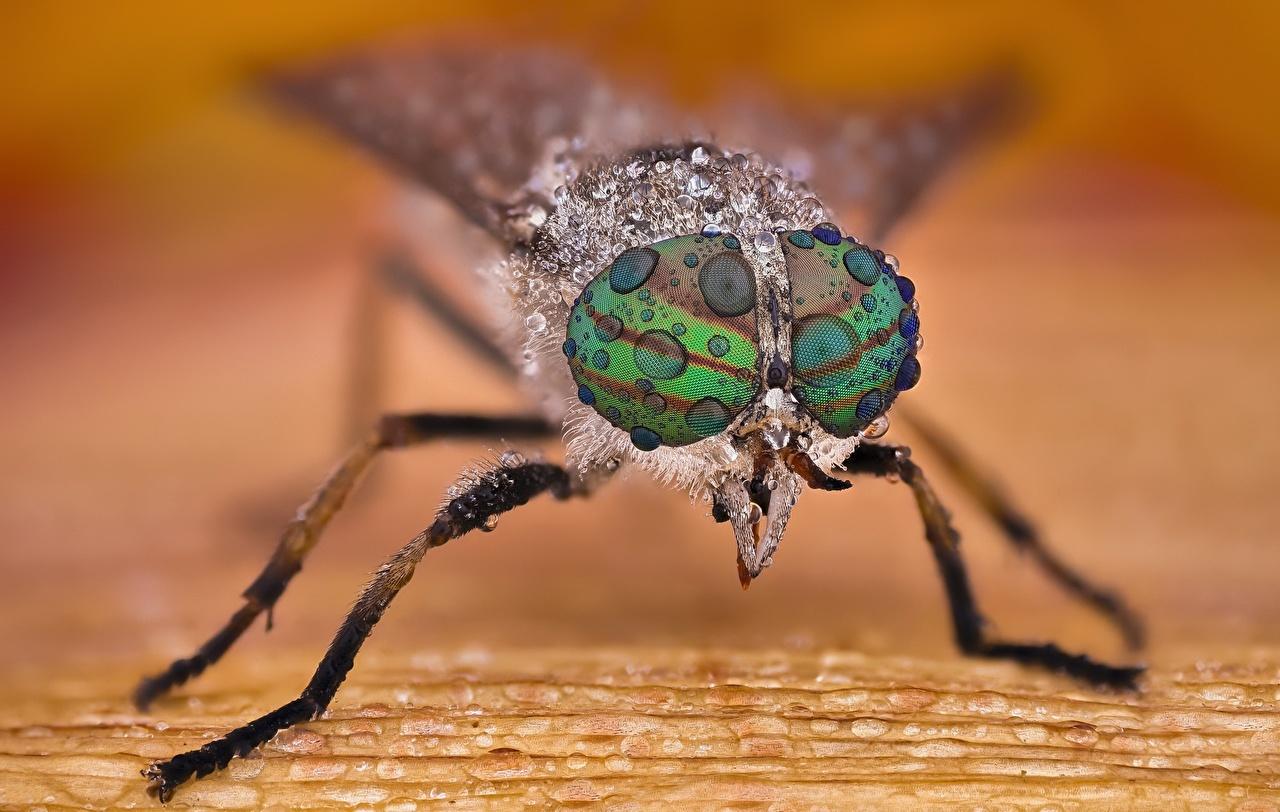 Desktop Wallpapers Insects Eyes Horsefly Drops Macro photography Closeup Animals Macro animal