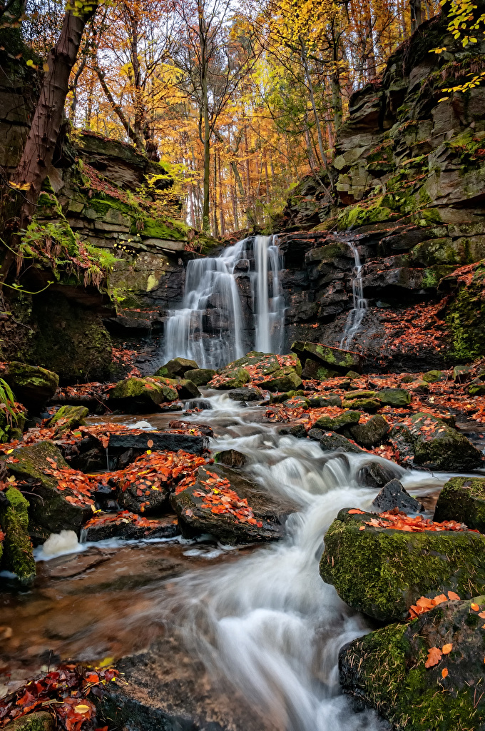 Image Foliage Autumn Nature Waterfalls Moss stone  for Mobile phone Leaf Stones