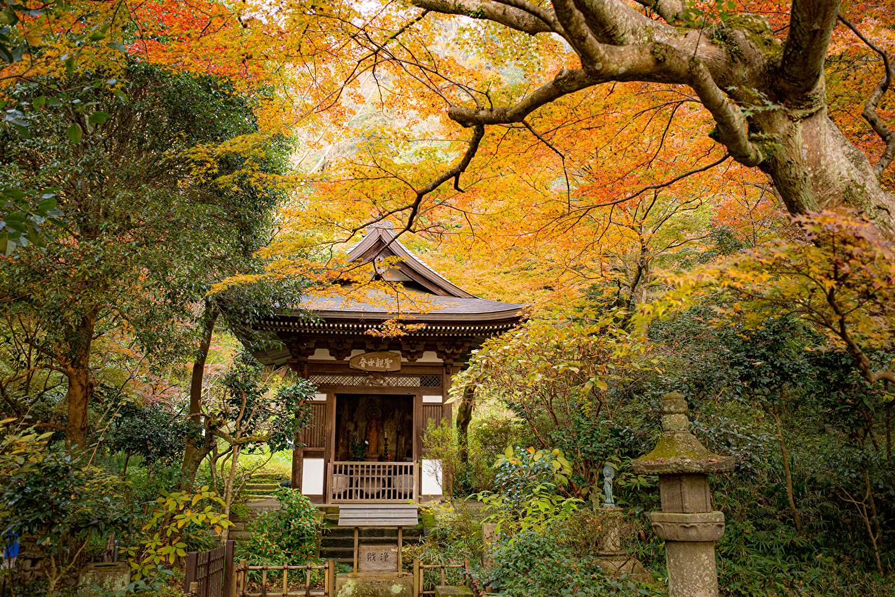 Фотографии Киото Япония осенние Природа парк Пагоды дерево Осень Парки дерева Деревья деревьев