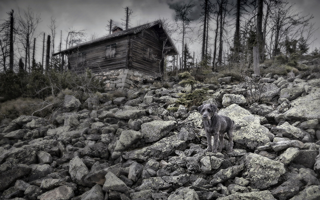 Perro Piedras Casa Viejo animales, un animal, perros, Edificio, vieja Animalia