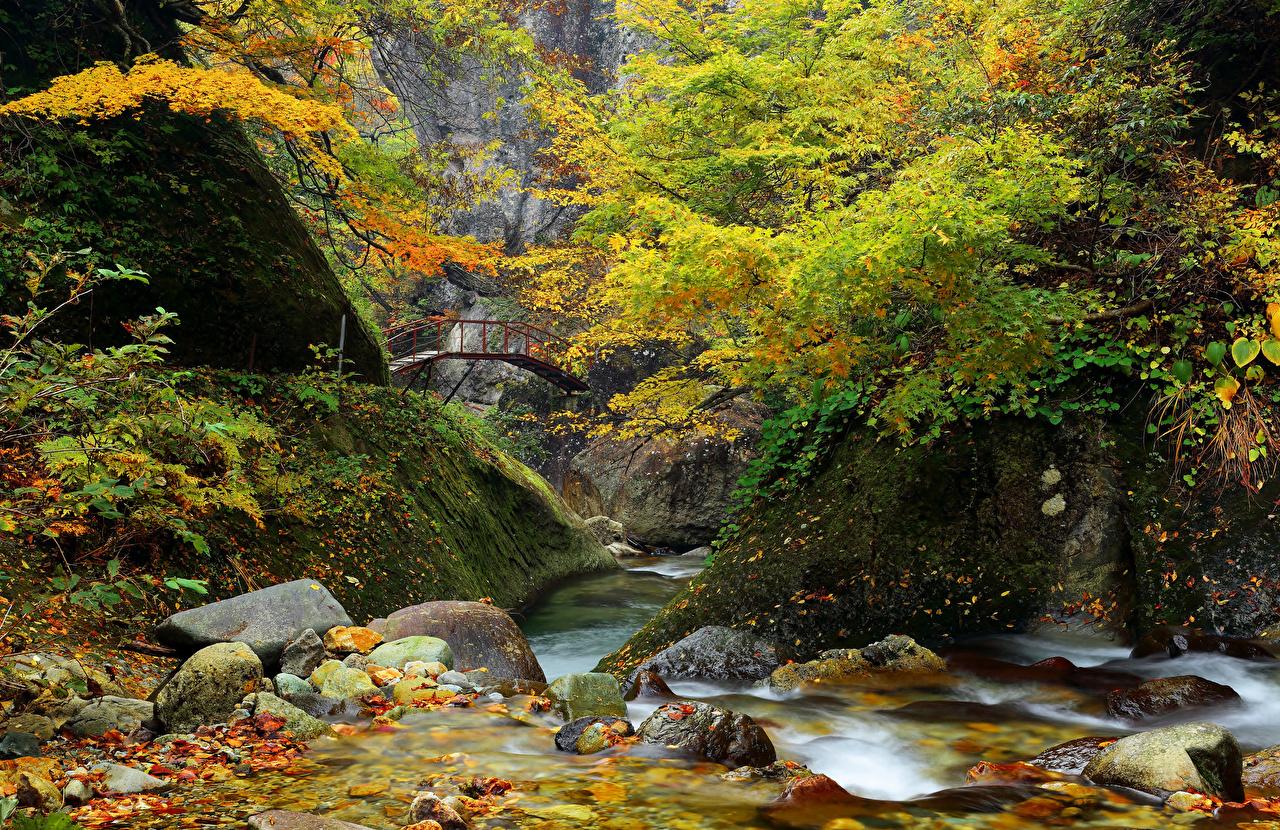 Florestas Parque Pedras Pontes Rios Outono Rocha Musgos floresta, rio, parques, ponte, pedra, penhasco Naturaleza