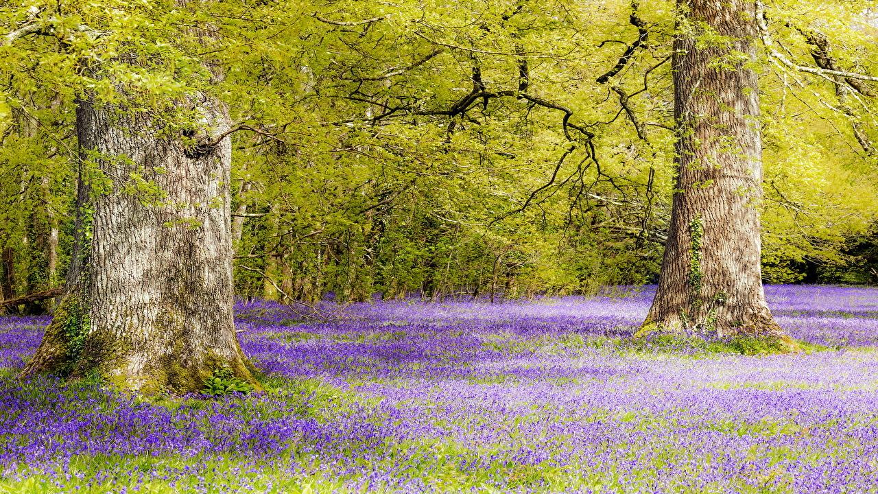 Foto Natura Il prato tronco di albero Alberi Tronco d'albero