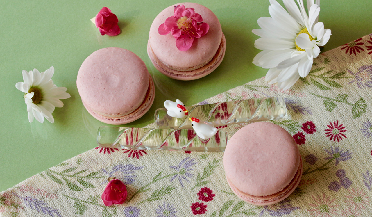 Picture Macaron Camomiles Food Three 3 french macarons matricaria