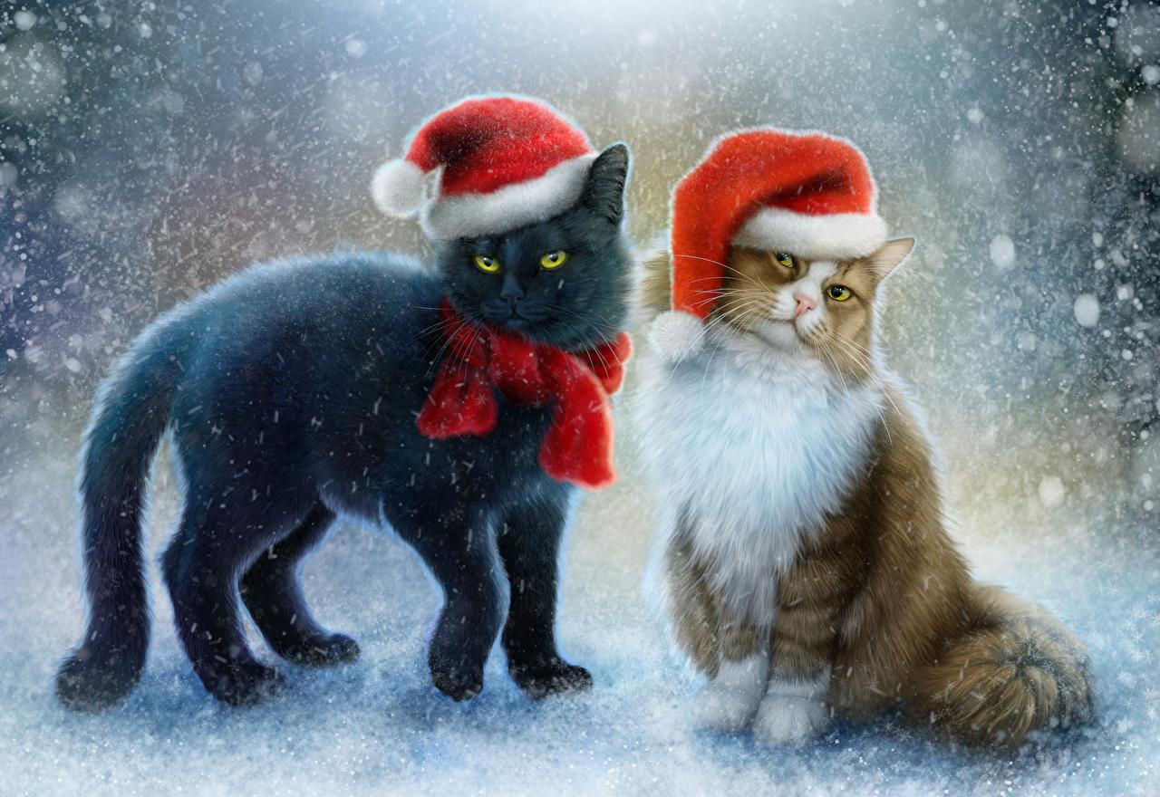 Sfondi del desktop Gatti Capodanno Sciarpa Due 2 Cappello invernale Neve Animali Disegnate gatto domestico natale anno nuovo dipinti animale