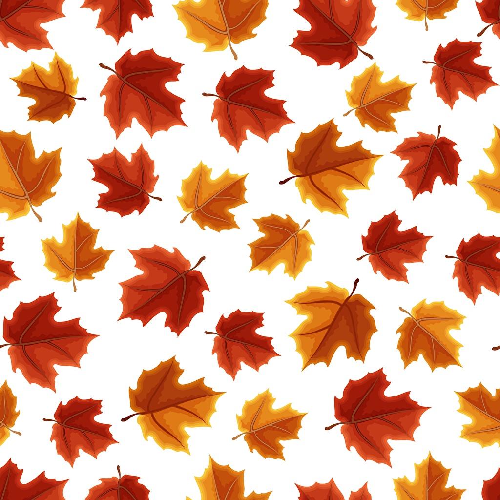 Image Texture Foliage acer Nature White background Leaf Maple