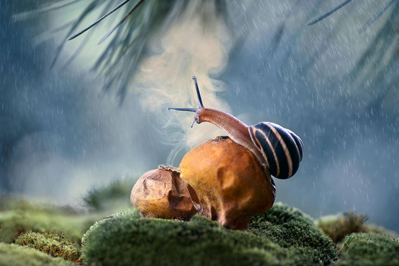 Photos Snails Rain animal Closeup Animals