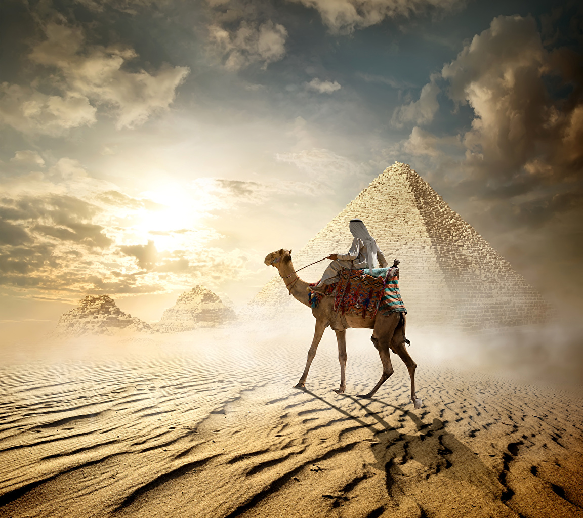 Desktop Wallpapers Camels Egypt Cairo Desert Pyramid Animals