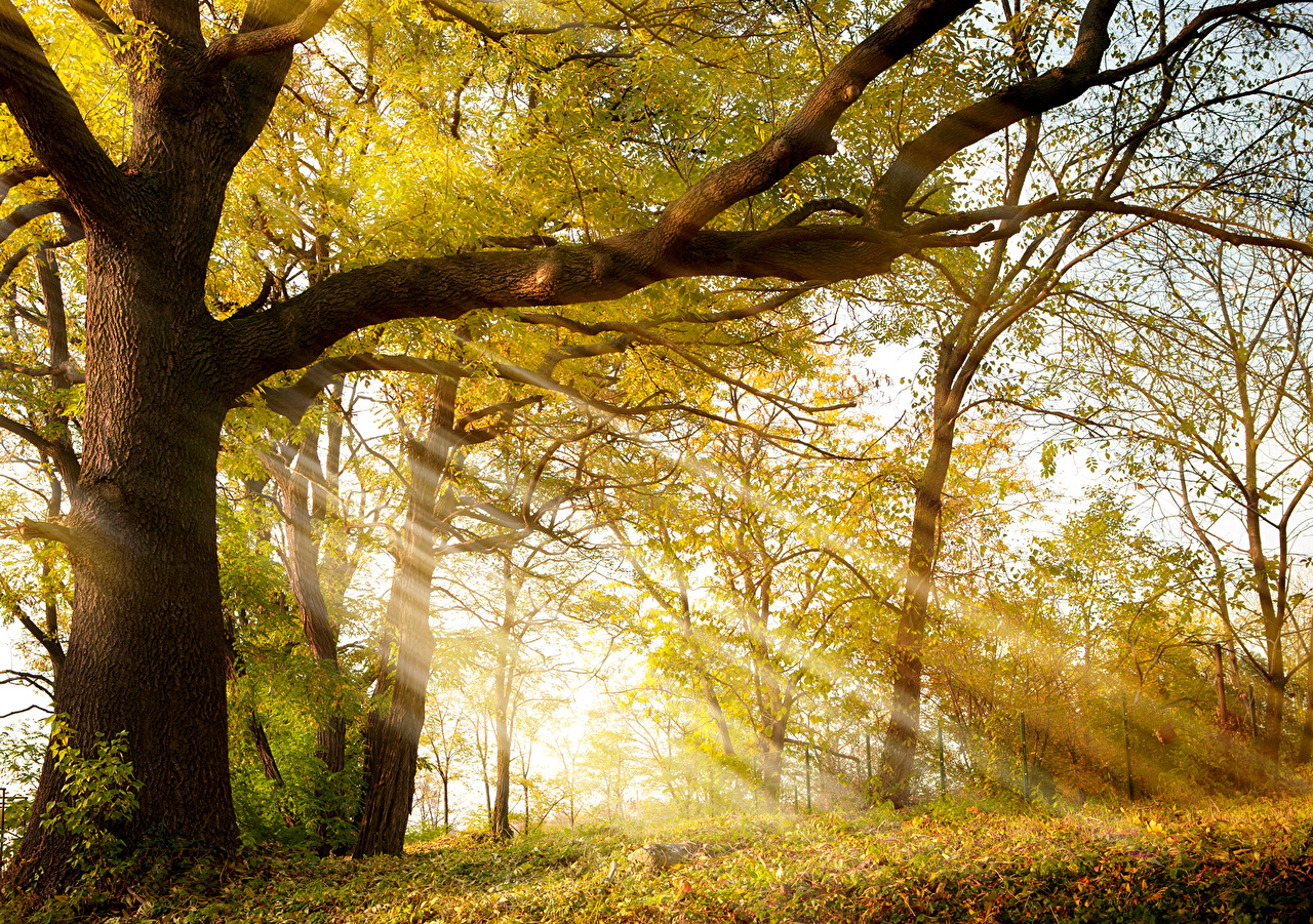 Pictures Rays of light Autumn Nature Trunk tree Branches Trees Seasons