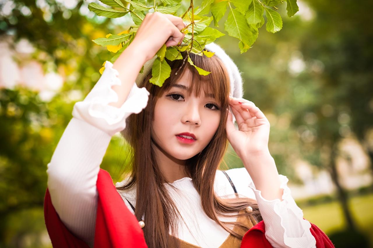Fotos von Braune Haare Bokeh Mädchens Asiatische Ast Hand Blick Braunhaarige unscharfer Hintergrund junge frau junge Frauen Asiaten asiatisches Starren