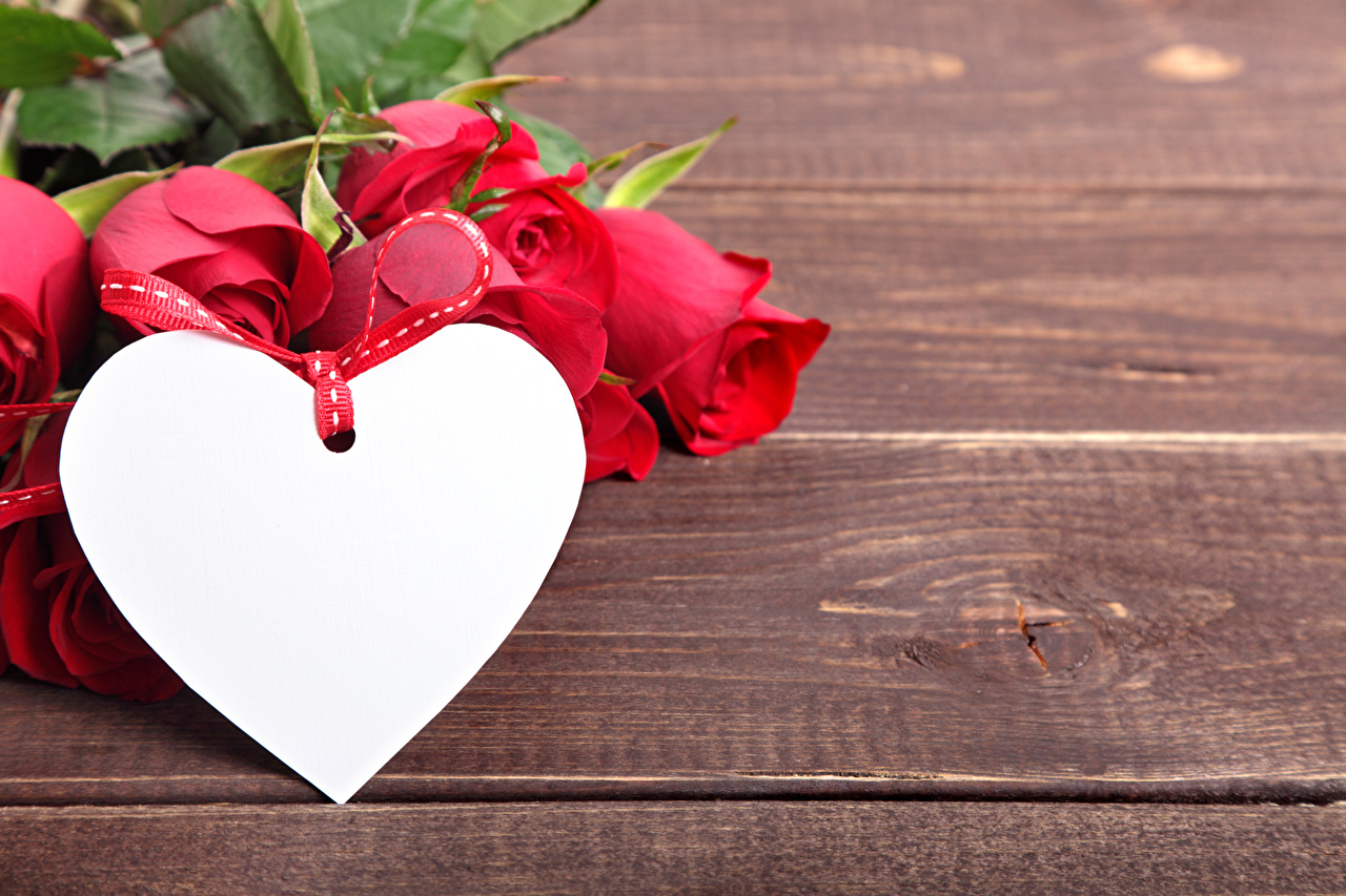 photo valentine s day heart red roses flower boards