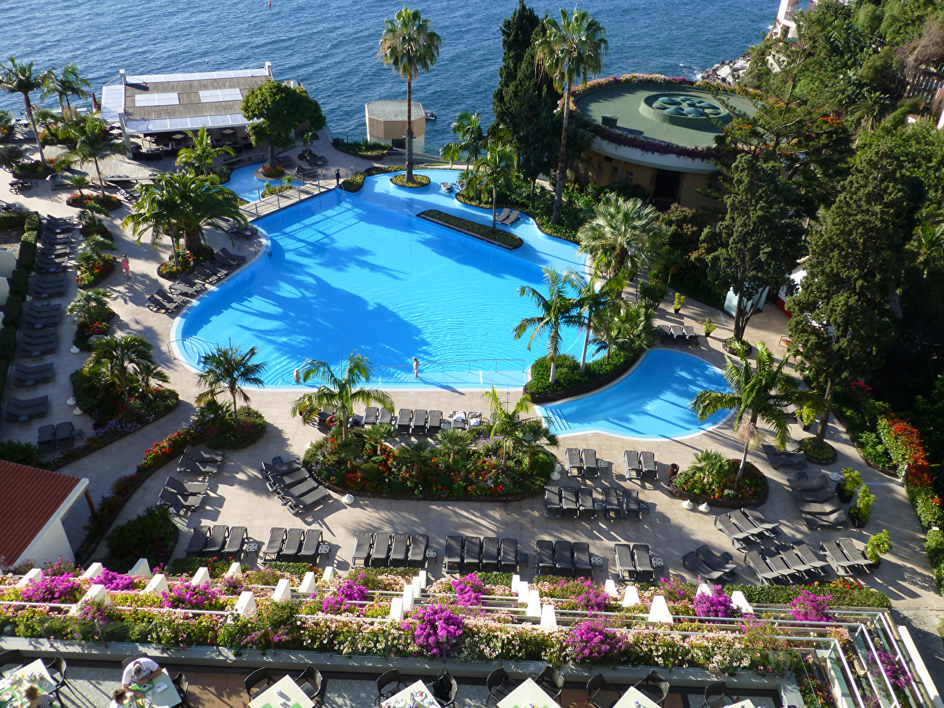 Wallpaper Portugal Resorts Swimming bath Madeira Palms Sunlounger Cities Pools Spa town palm trees