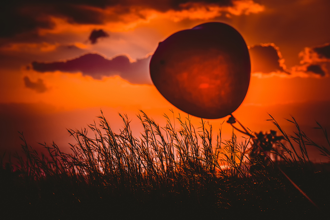 Images Toy balloon silhouettes Heart balloon Nature sunrise and sunset Grass balloons Silhouette Sunrises and sunsets