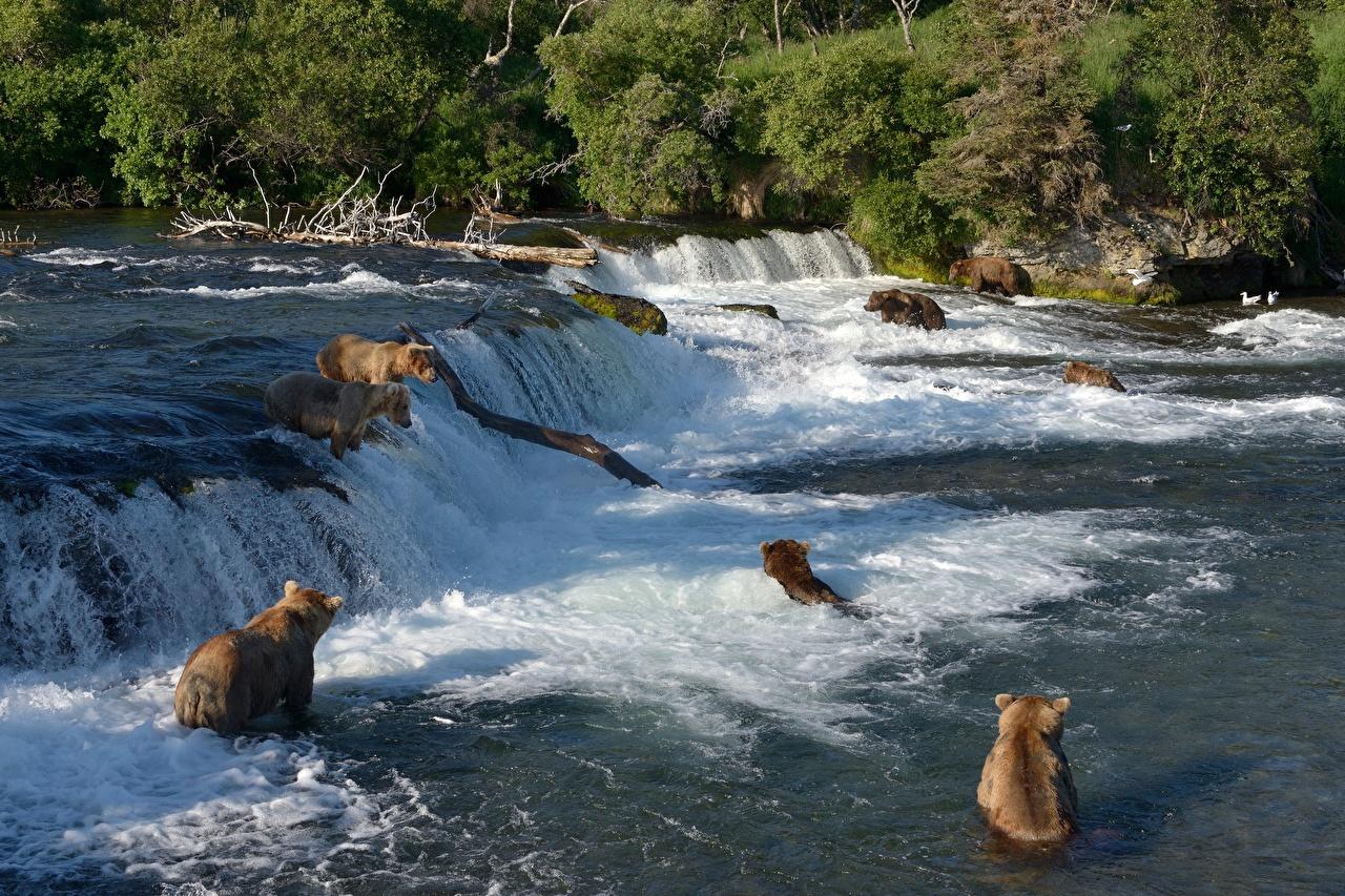 Fotos von Braunbär Bären Fischerei Wasserfall Flusse Tiere
