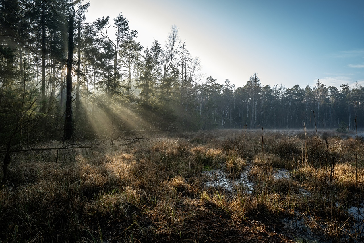 Picture Rays of light Germany Grossdittmannsdorf, Saxony Nature Swamp Forests Trees forest
