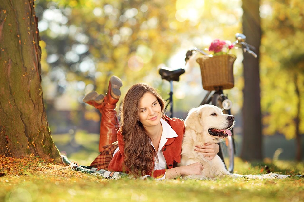 Bilder von Golden Retriever hund Braune Haare Liegen Bokeh Fahrrad junge frau Gras Hunde Braunhaarige Liegt ruhen hinlegen unscharfer Hintergrund fahrräder Mädchens junge Frauen