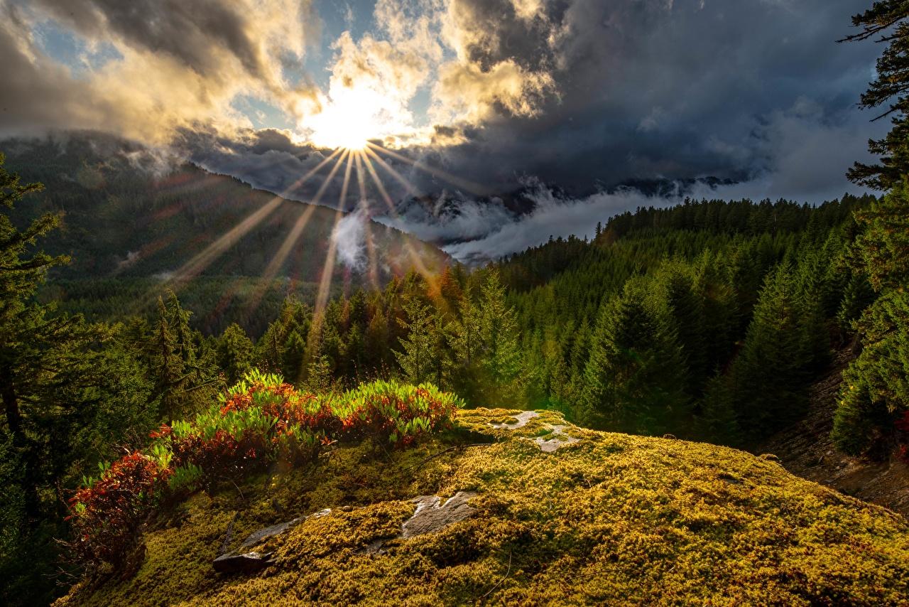 Desktop Wallpapers USA Washington State, White Pass Sun Nature Mountains Trees Clouds mountain
