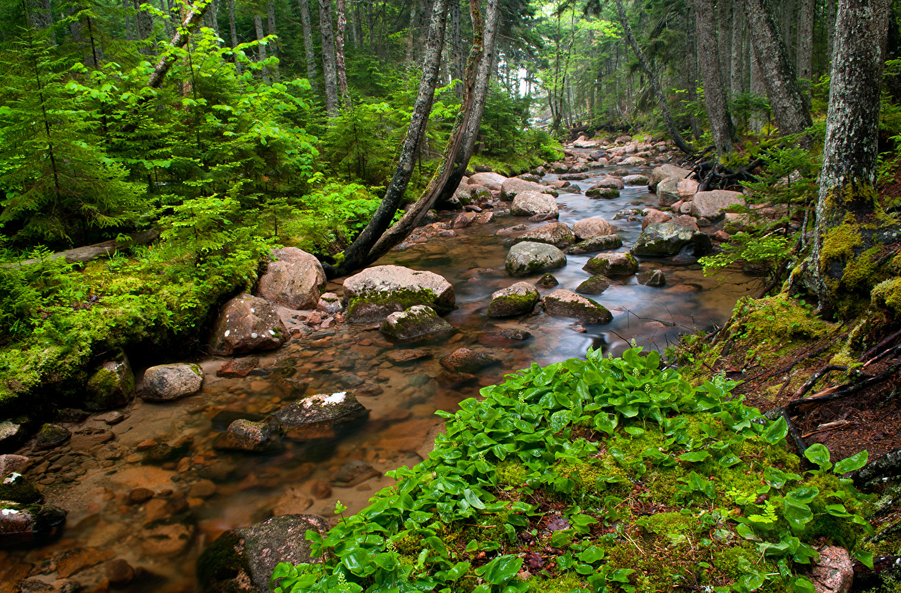 Image Nature Streams forest Moss stone Creek brook Stream Creeks Forests Stones