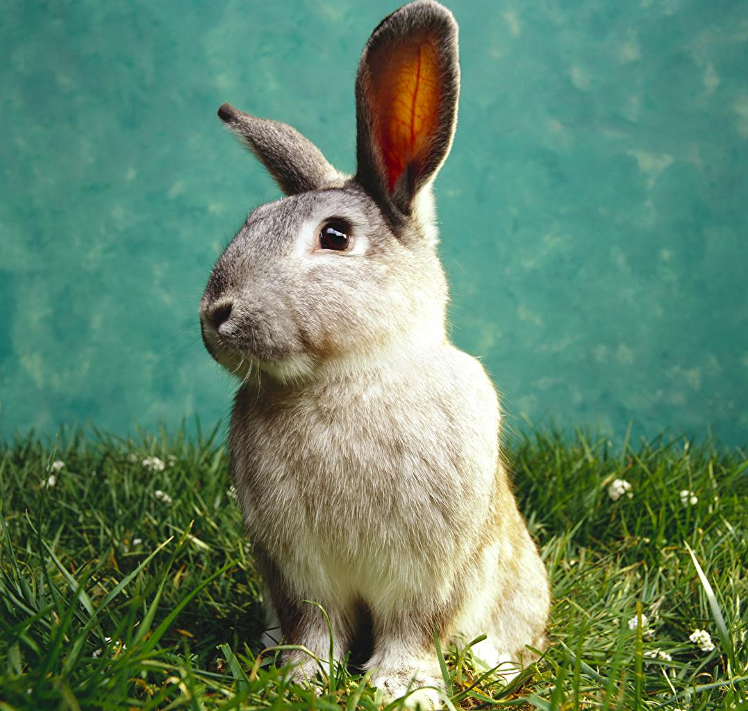 ,兔,草,動物,
