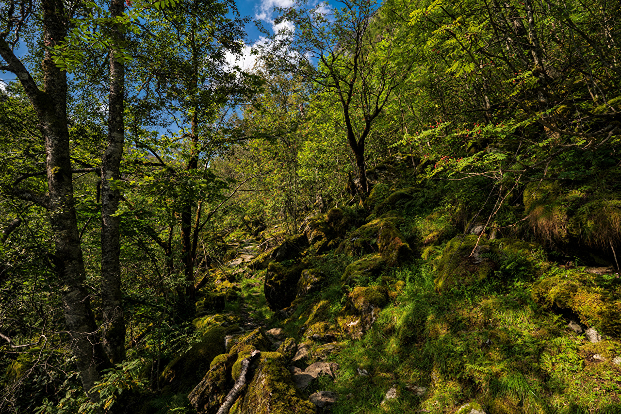 Picture Norway Hardangerfjord Nature Forests Moss stone Trees forest Stones