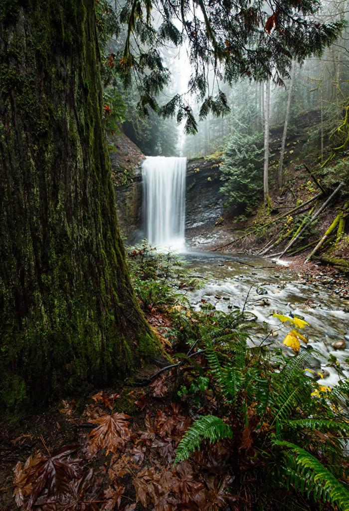 Bilder von Kanada Benson Creek Falls Regional Park Natur Wasserfall Laubmoose Bäume