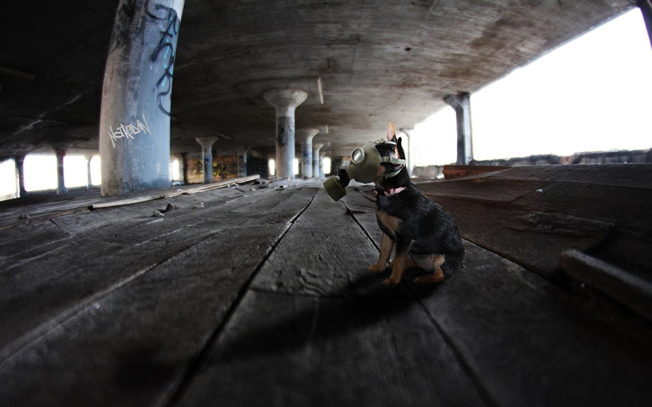 Фотографии Собаки противогазе Креатив сидящие Доски Противогаз оригинальные сидя Сидит