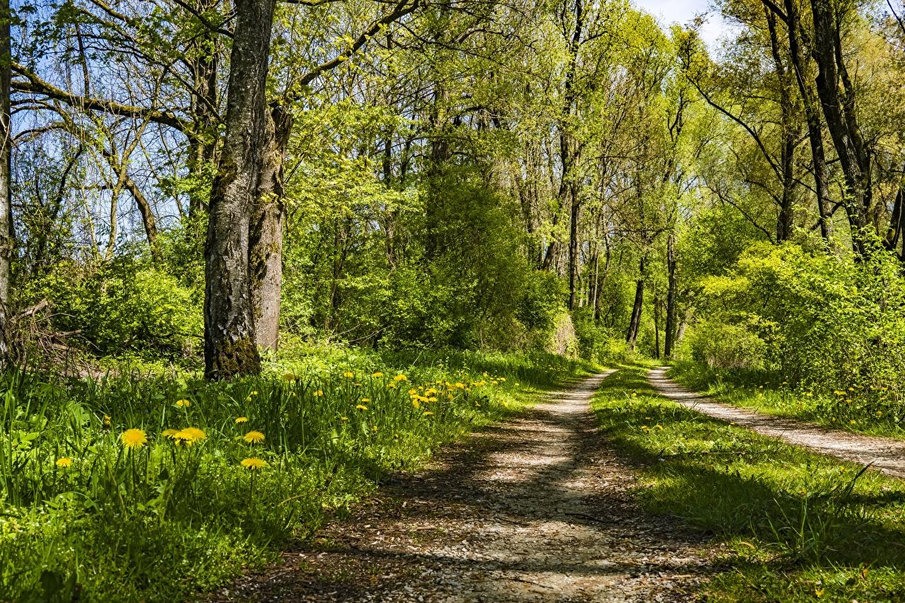 Hintergrundbilder Natur Sommer Straße Wälder Gras Bäume Wege