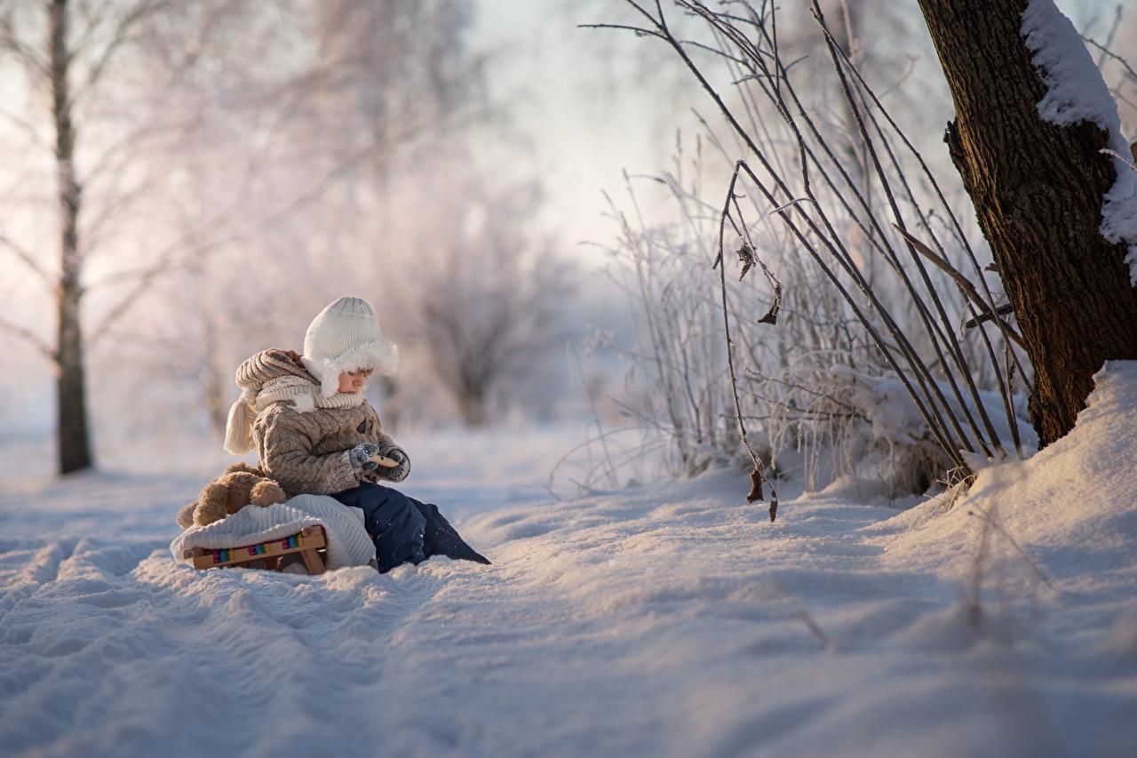 Bilder von jungen Schlitten unscharfer Hintergrund kind Natur Winter Schnee sitzt Junge Bokeh Kinder sitzen Sitzend