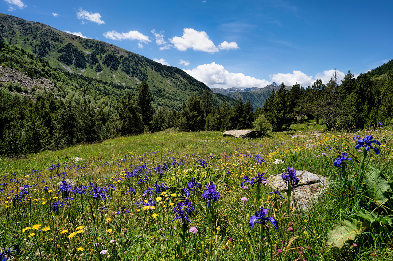 Desktop Wallpapers Nature Sorteny Trees Mountains Meadow Andorra Grass mountain Grasslands
