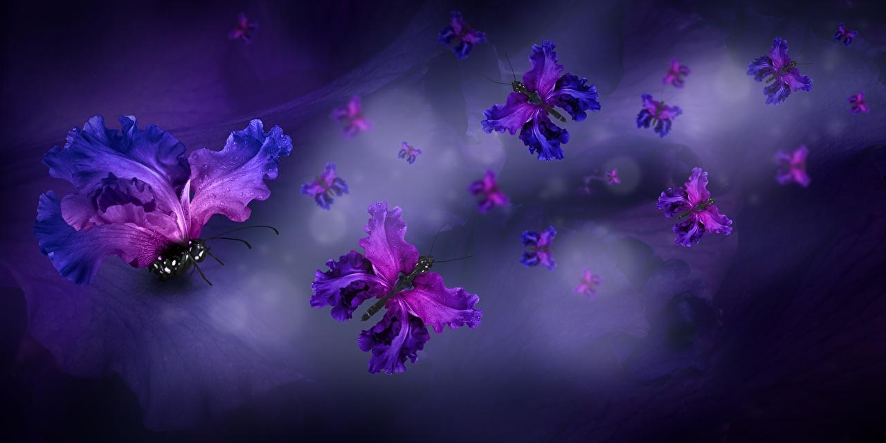 Desktop Wallpapers butterfly Petals flower Creative Butterflies Flowers