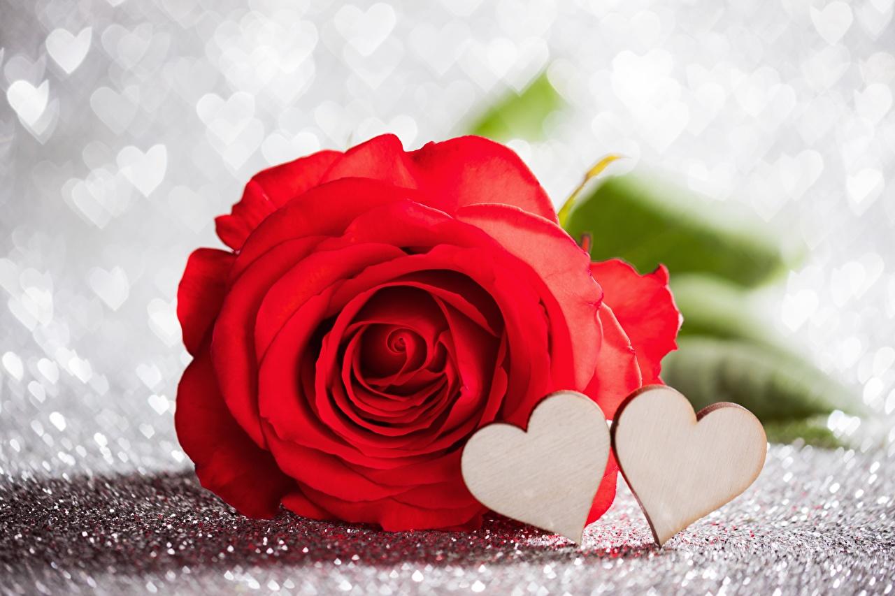 Rosas Dia dos Namorados Vermelho Coração Flores