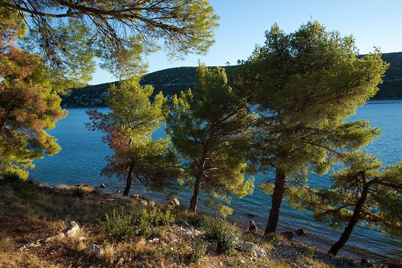 Desktop Wallpapers Croatia Sibenik Nature Coast Trees