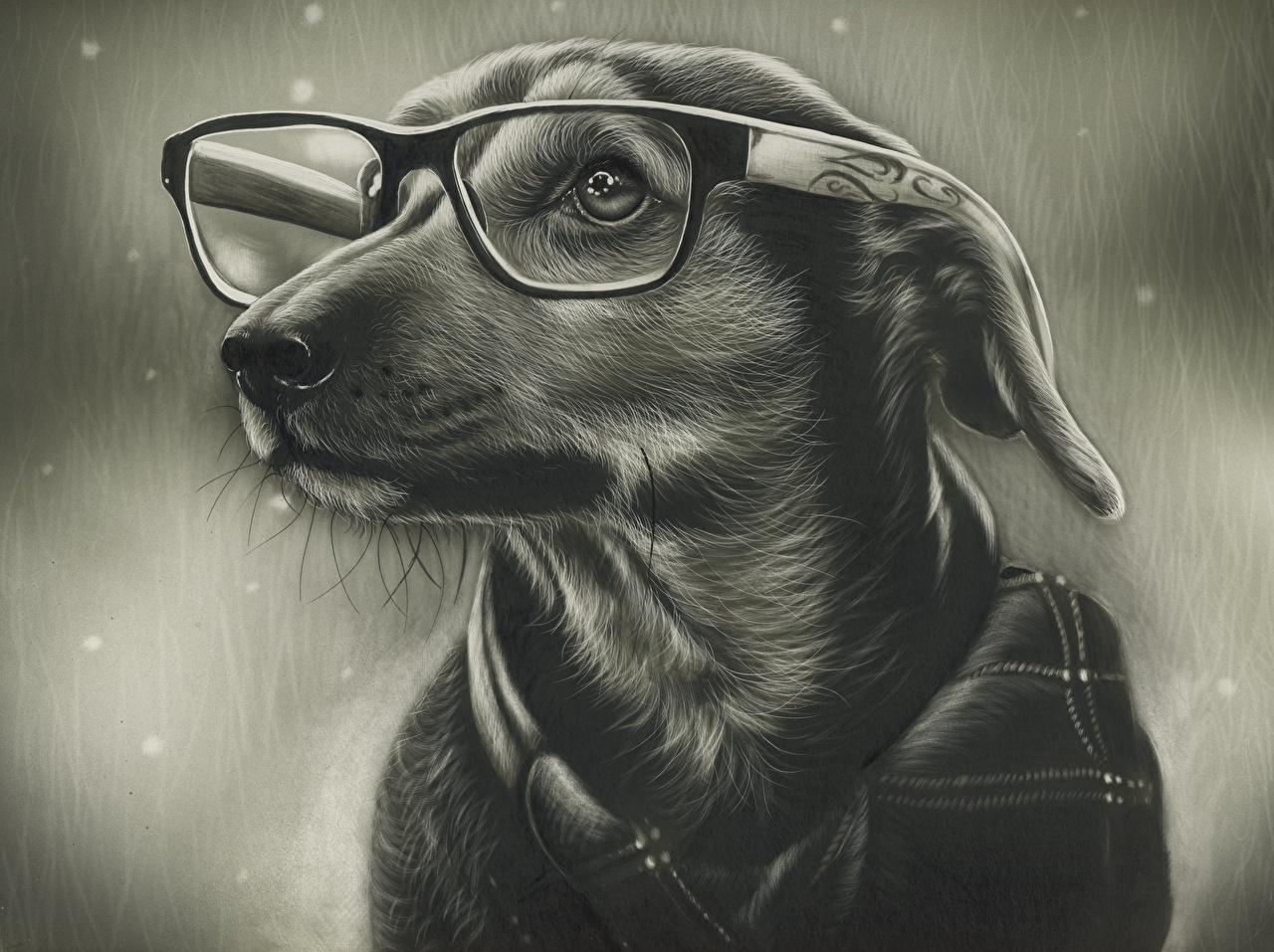 Wallpaper Dogs eyeglasses Black and white Animals Painting Art dog Glasses animal