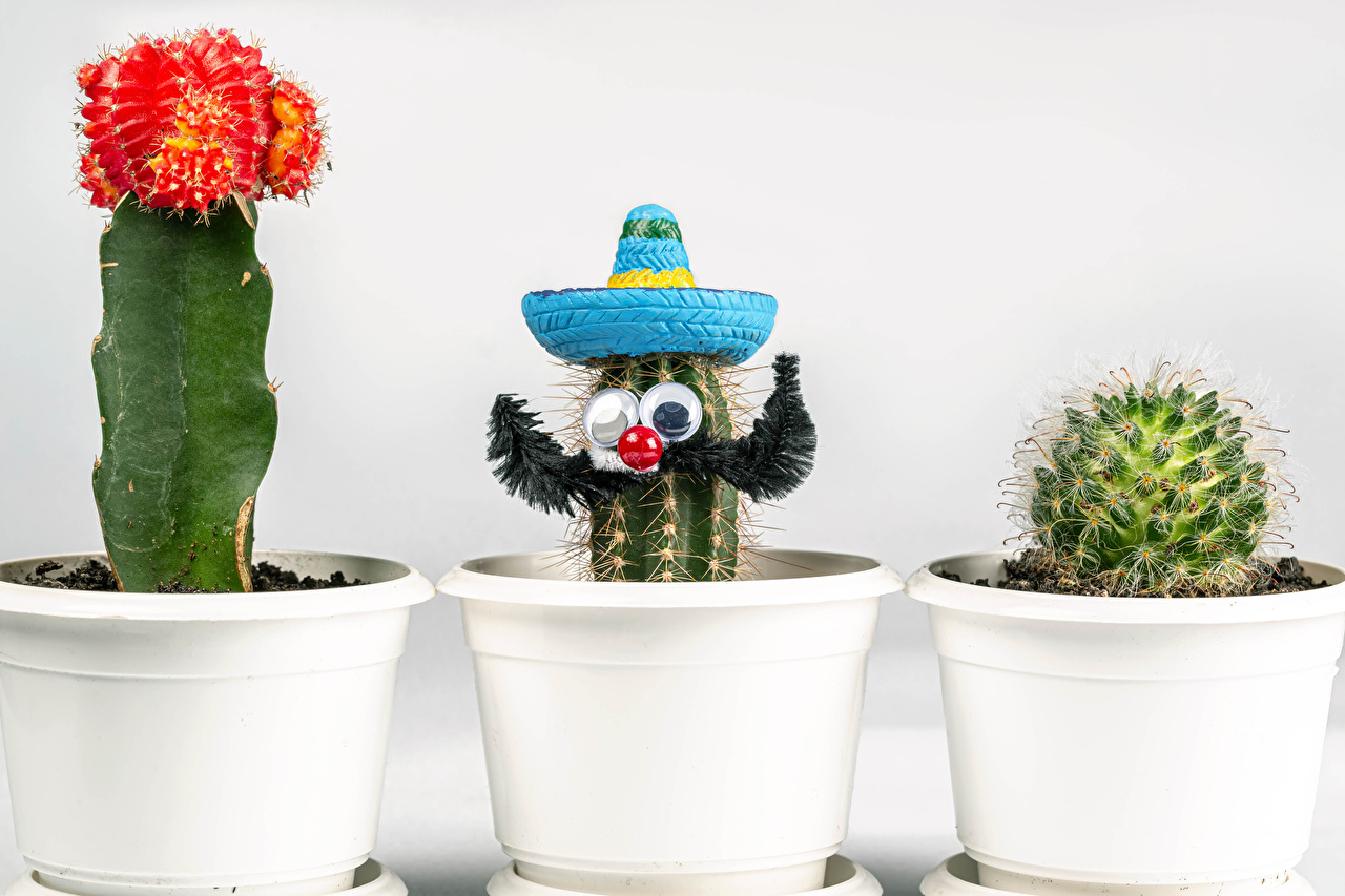 Photos Hat Flowerpot Flowers Creative cacti Three 3 White background plant pot flower pot flower Cactuses