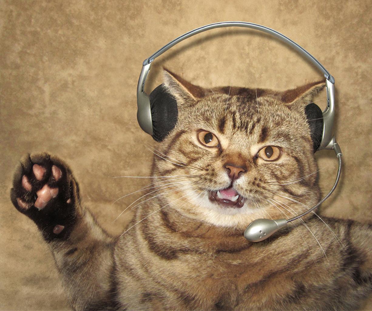 壁紙 クリエイティブ 飼い猫 おもしろい ヘッドフォン