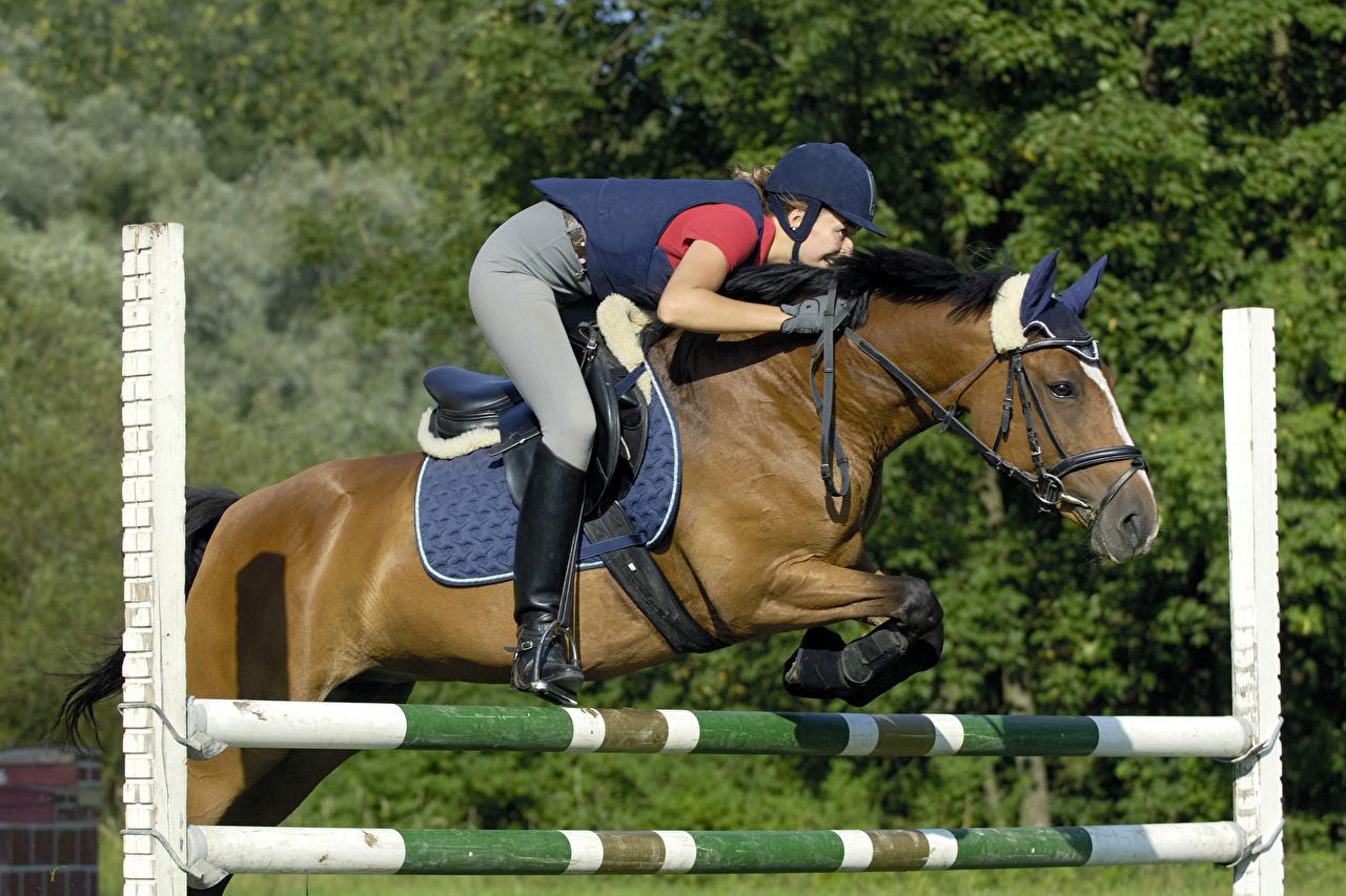 picture horse girls sport equestrian sport jump uniform