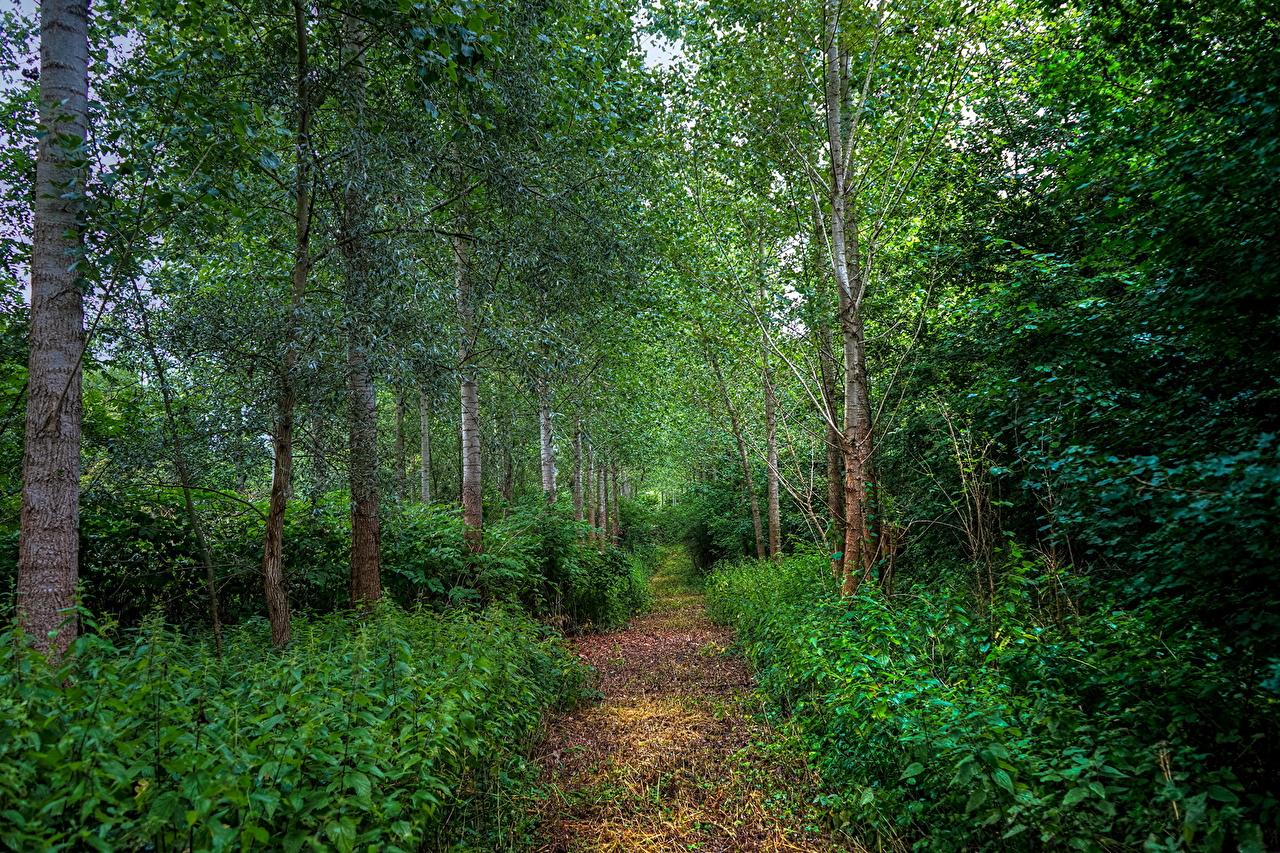 Achtergronden bureaublad Natuur Pad weg bos Een boom Struiken smalle weg Bossen Bomen