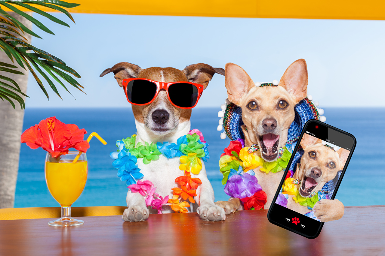 Image Chihuahua Jack Russell terrier Dogs Resorts Selfie Smartphone Funny Two Juice Glasses Stemware Animals dog Spa town smartphones 2 eyeglasses animal