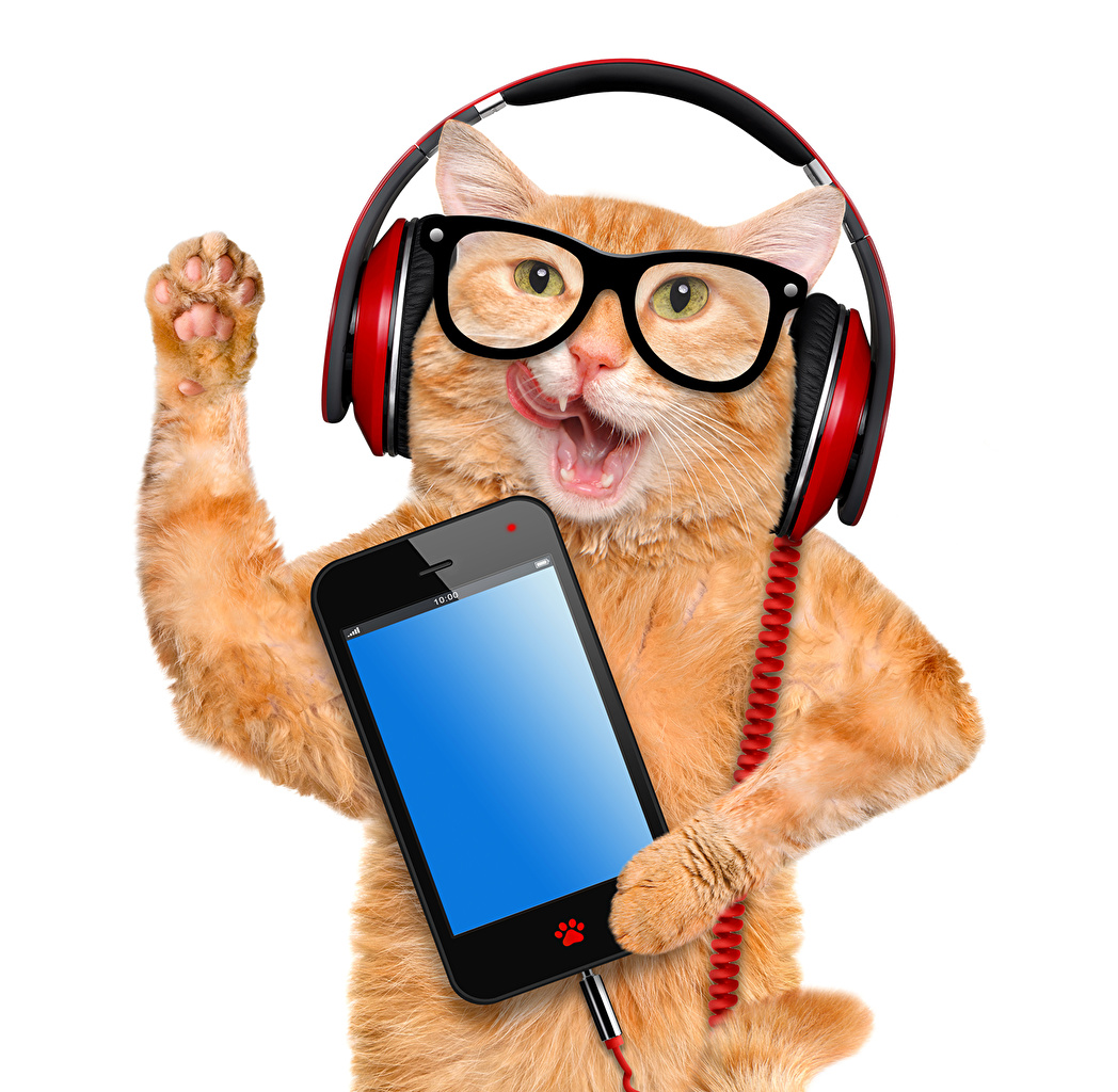 Picture Humor Cats Headphones Smartphone Funny Ginger color eyeglasses Animals White background funny cat smartphones red orange Glasses animal
