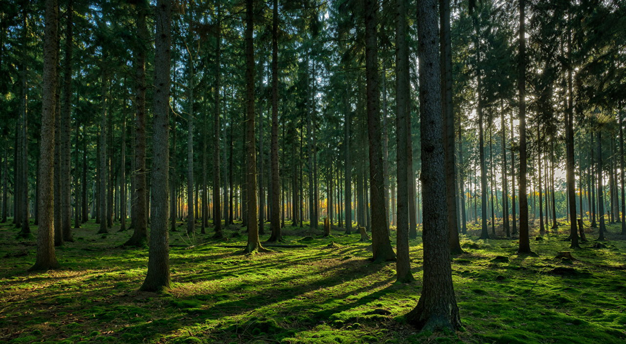 Picture Nature forest Moss Trees Forests