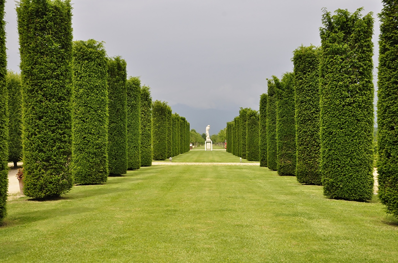 Images Italy Palace of Venaria Venaria Reale Allee Gardens Lawn Trees Cities Avenue