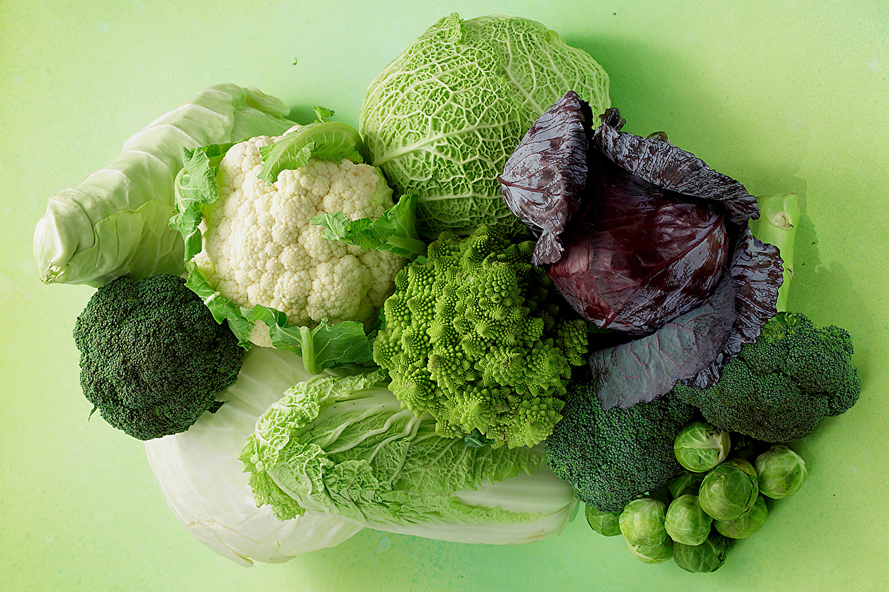 Photos Cabbage Food Vegetables Colored background