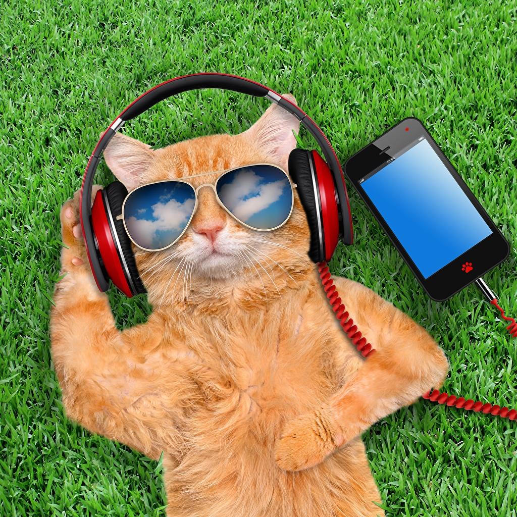 Fonds d'ecran Chat domestique Lunettes Casque audio Smartphone Roux Drole Animaux télécharger photo