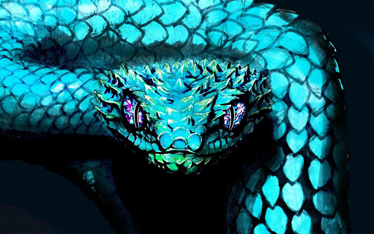 Bilder von Schlangen Hellblau Kopf Tiere Gezeichnet ein Tier