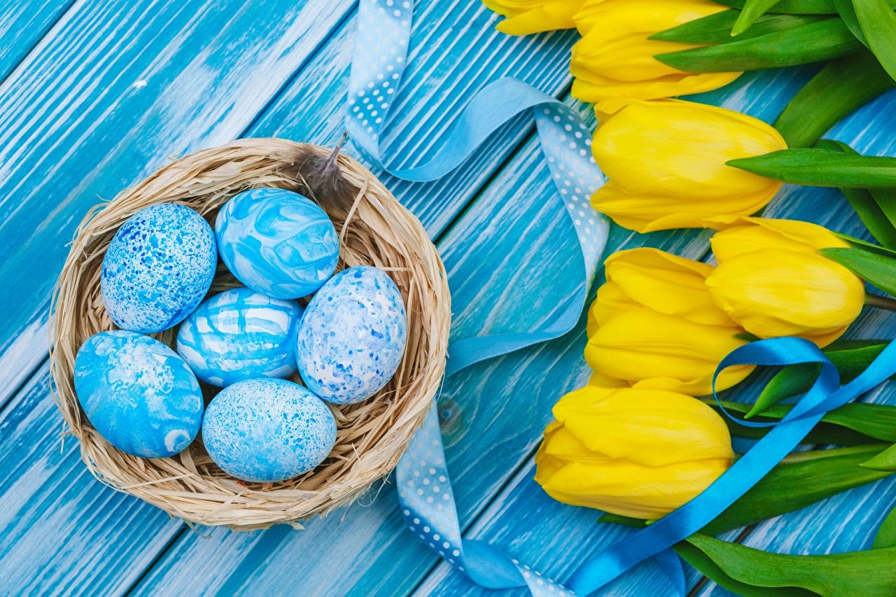 Foto Ostern eier Nest Tulpen Blumen Ei Blüte