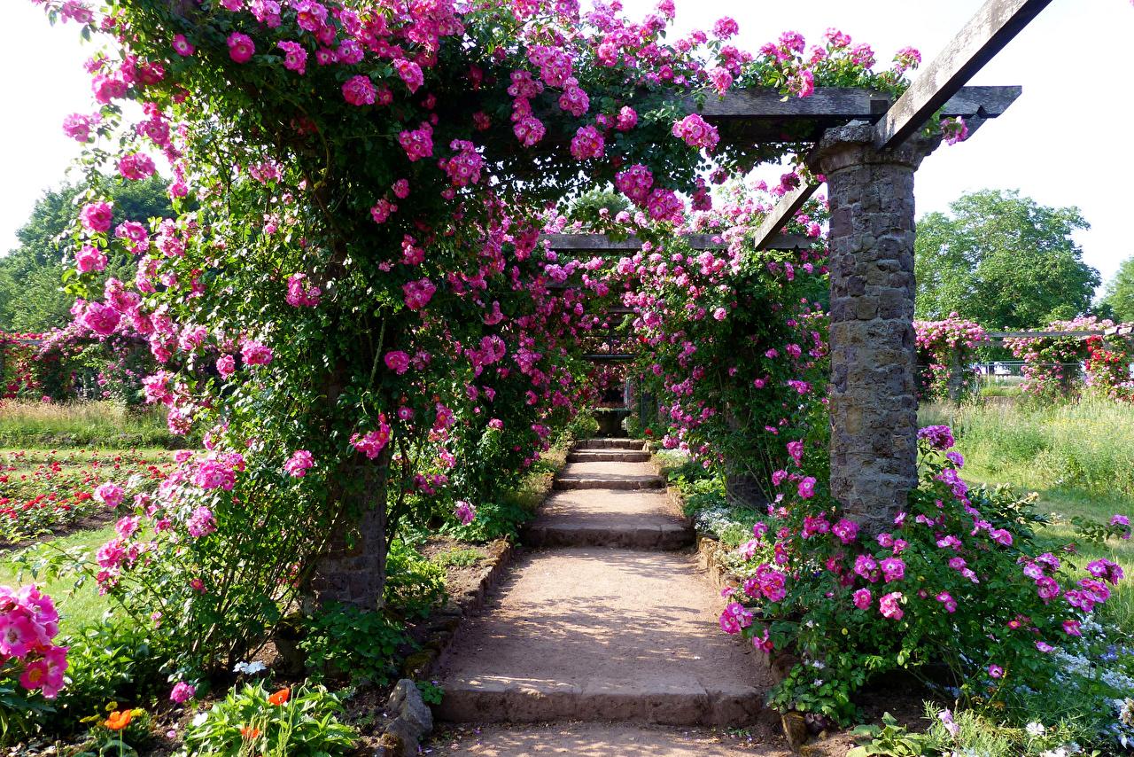 Bilder Deutschland Darmstadt Park Rosenhoehe Natur Rosen