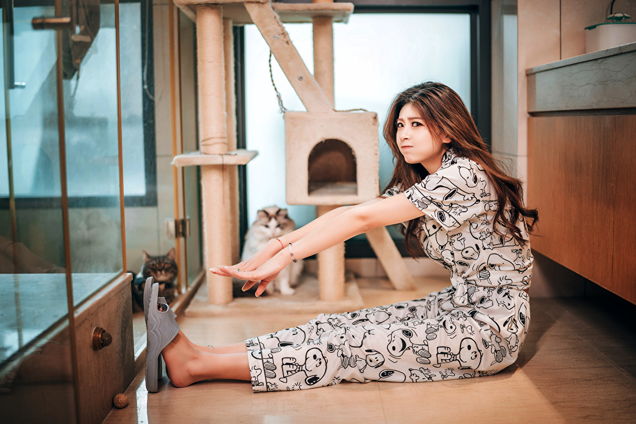 Photos cat Brown haired female Asiatic sit Hands Animals Cats Girls young woman Asian Sitting animal
