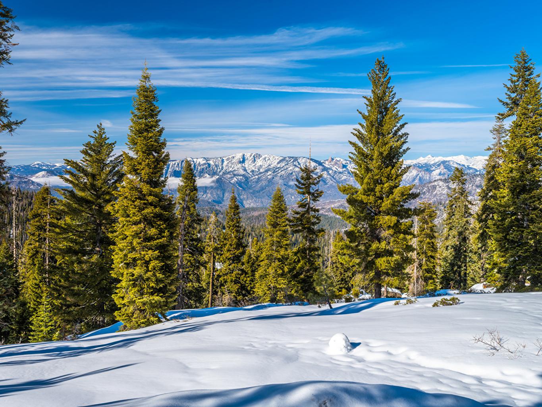 Bilder von Kalifornien Vereinigte Staaten Kings Canyon National Park Natur Parks Schnee Bäume USA