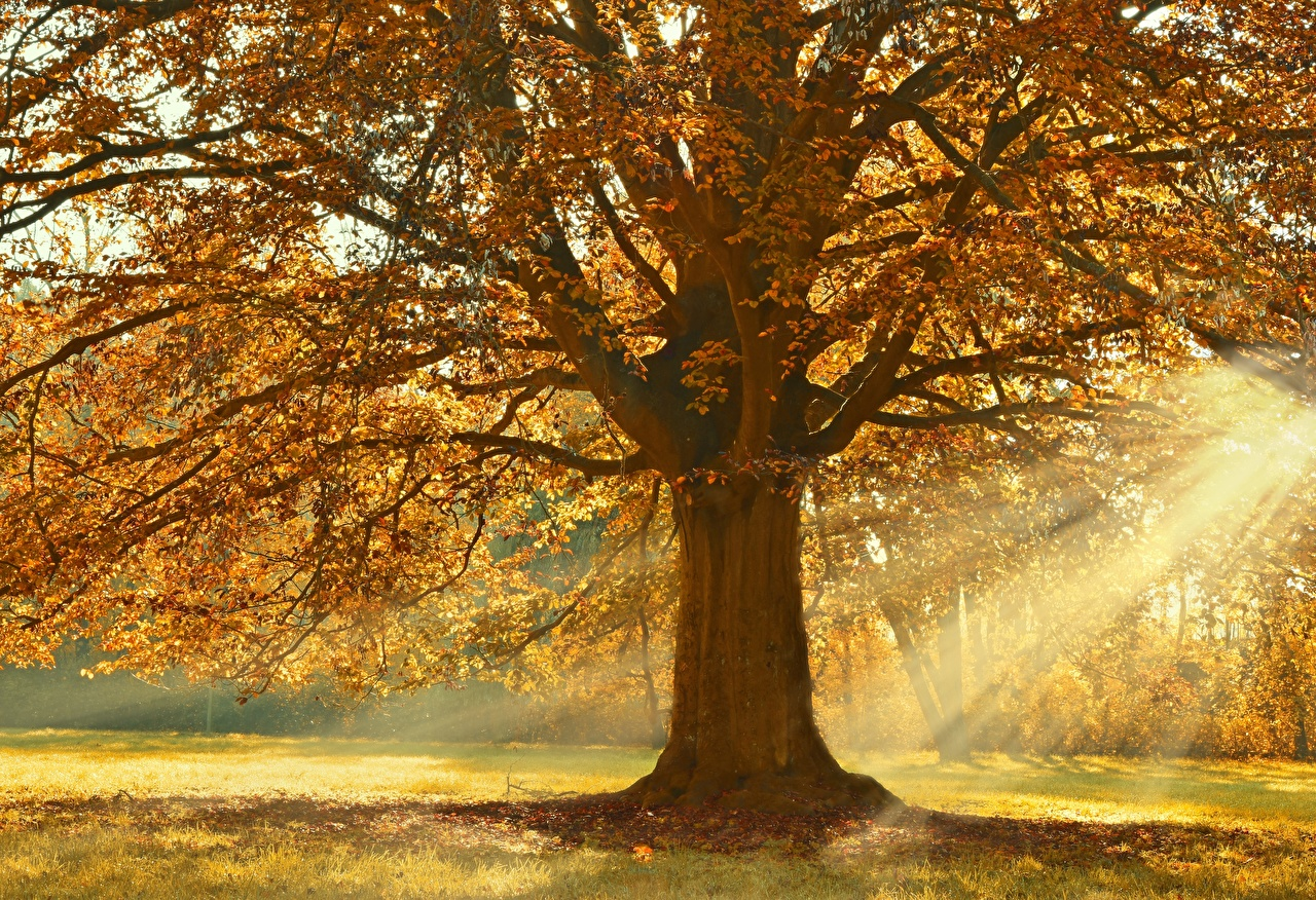 Wallpaper Rays of light Linden Autumn Nature Branches Trees