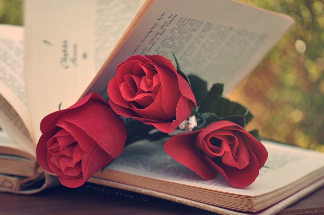 Photo Red Roses flower books Closeup rose Flowers Book