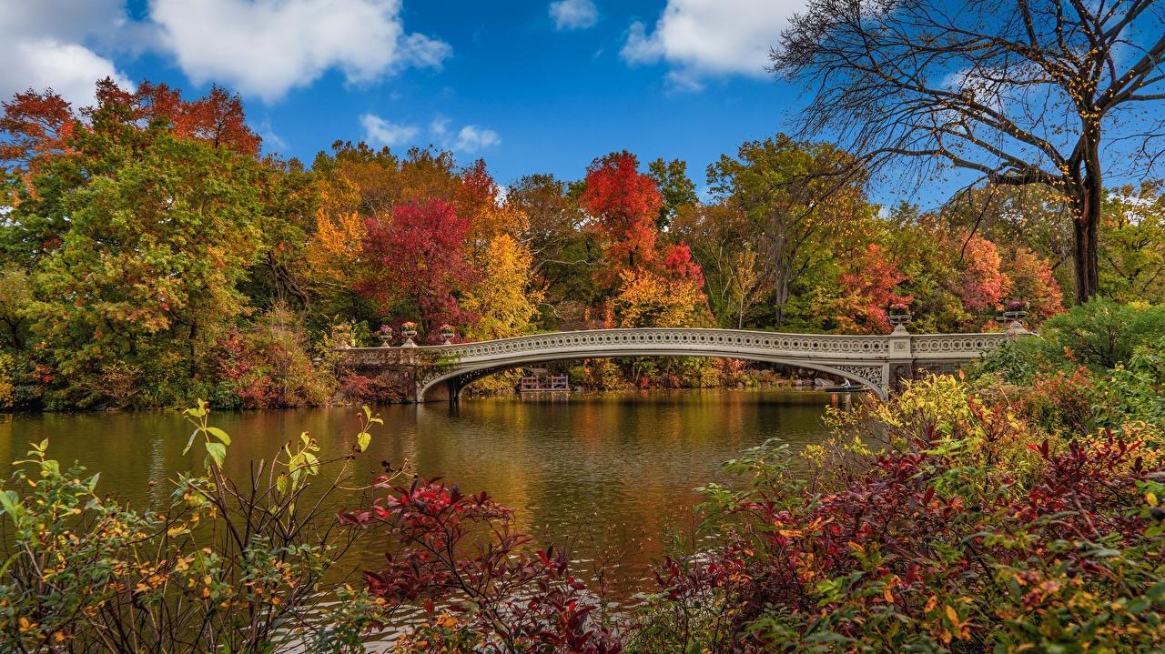 壁紙 秋季 橋 美国 纽约 大自然 下载 照片